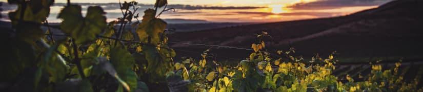 Abbazia S. Anastasia - Vini bianchi biologici e biodinamici